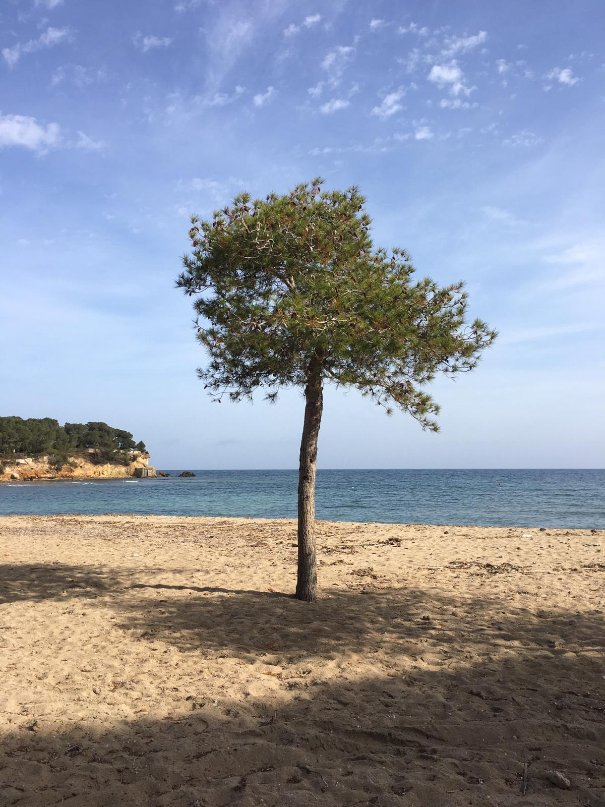 Ibiza – still under lockdown…